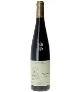 Pinot Noir - 2015 - Jean François Ginglinger